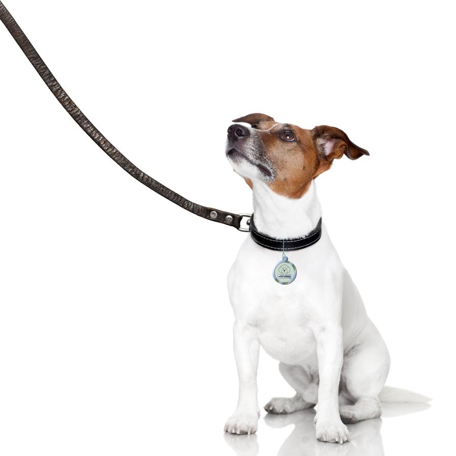 Как вести собаку на поводке