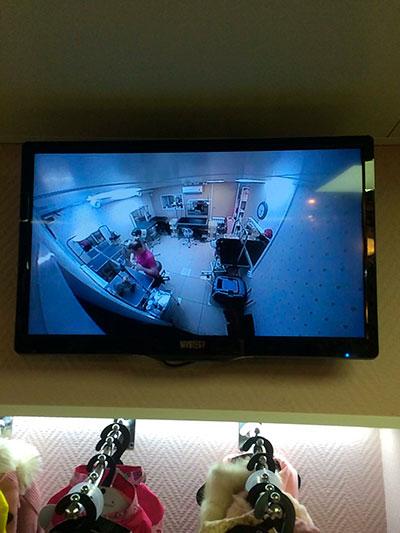 За работой грумера в зоосалоне наблюдают пристальные видеокамеры