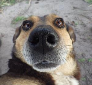 Зачем собакам усы