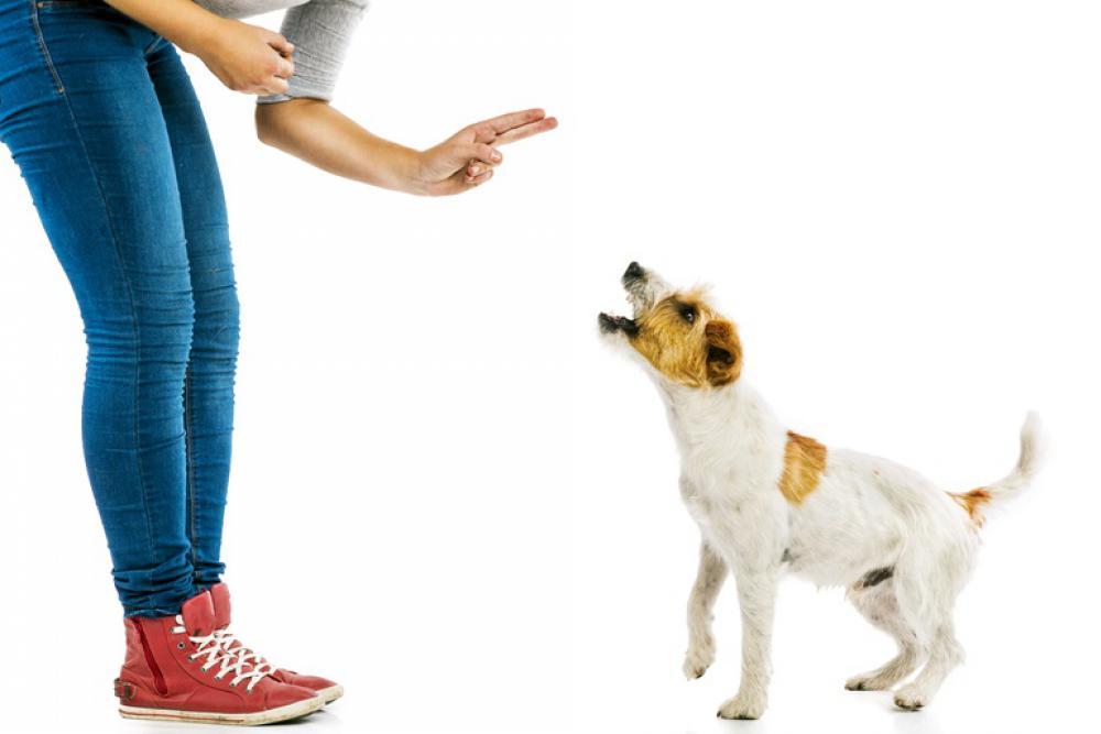как отучить собаку прыгать от радости