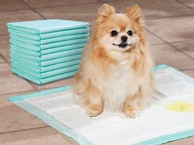 как приучить щенка к туалету на пеленку