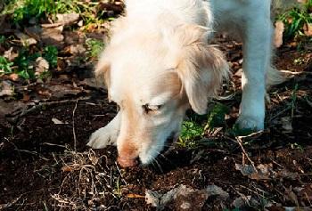 Собака есть землю