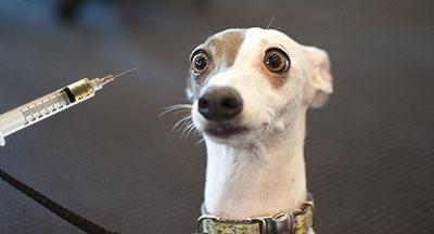 Как часто глистогонить собаку