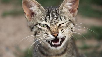 Зачем кошкам усы